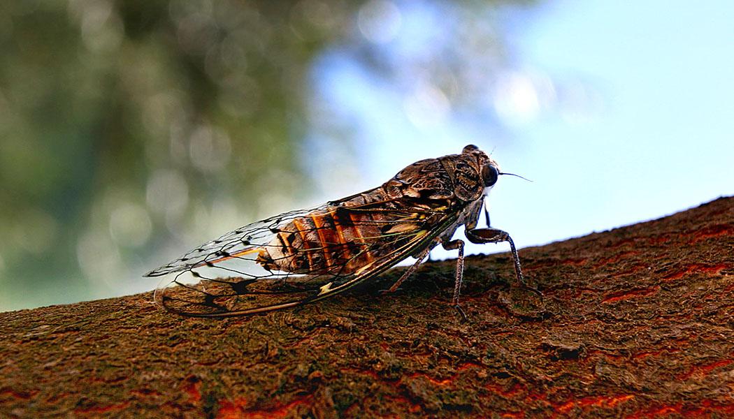 Gesucht: Ein Blogname – Zikaden sollen uns ihren Namen leihen