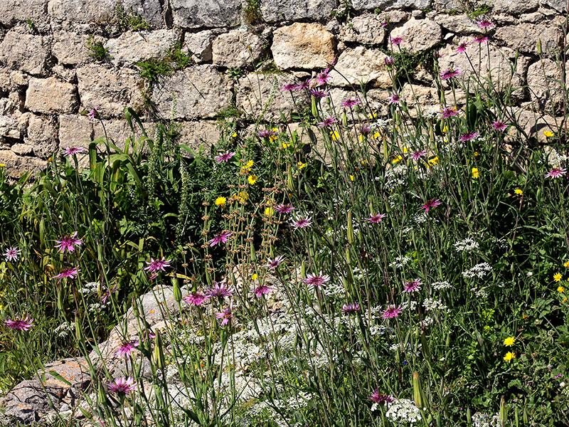 Botanisches Frühlingswunder.