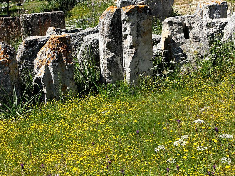 Blumenteppich zwischen Mauerresten.