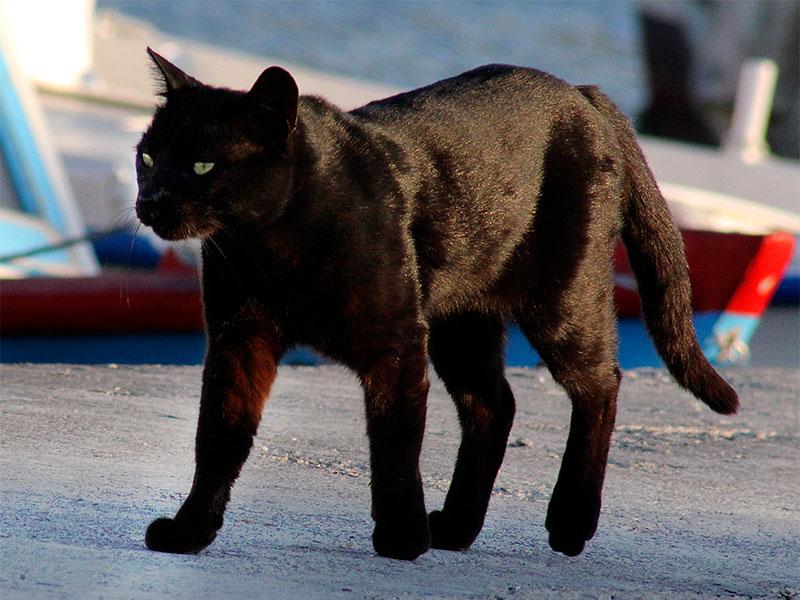 Eine der Hafenkatzen bei ihrem Rundgang.