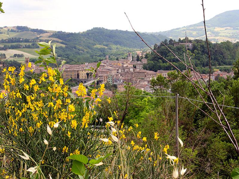 Panoramablick auf Pergola.
