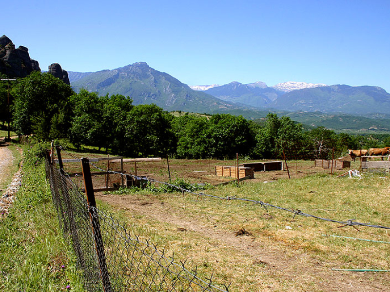 Kühe mit Bergpanorama.