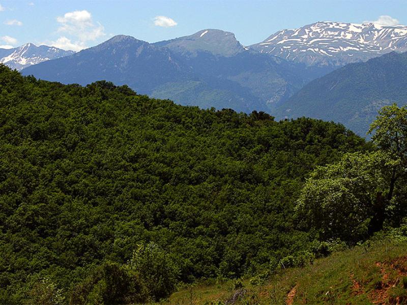 Dichte Laubwälder, dahinter der schneebedeckte Pindos.