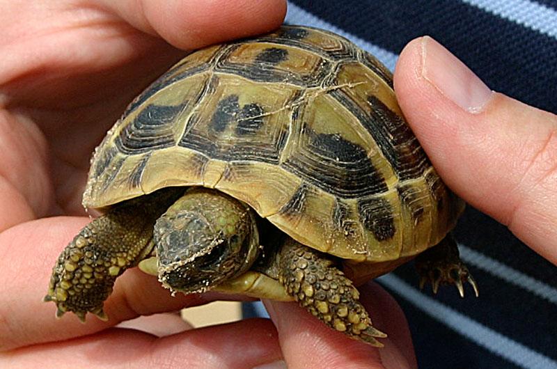 Schildkröten-Kind.