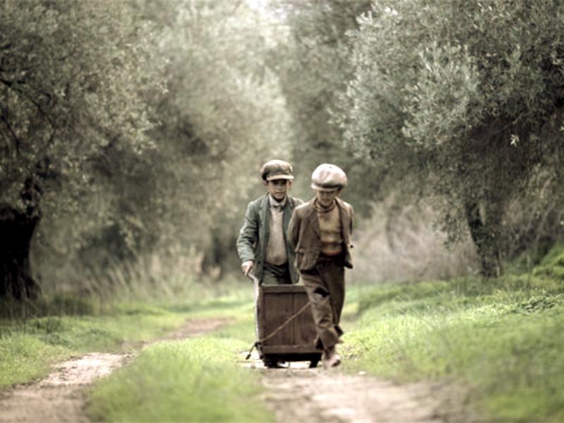 Kurzfilm über die Olivenhaine der Insel Kreta und Geschichten von den Menschen