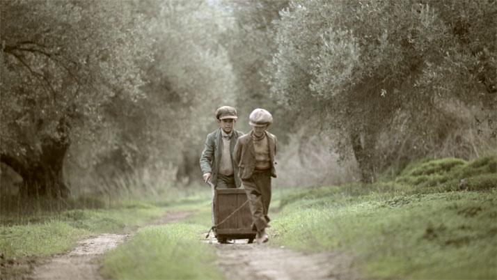 """The Olive Tree Will Always Be Here'' film still, Indigo View & GAEA. - Der Kurzfilm """"The Olive Tree Will Always Be Here'' zeigt dass die Olivenernte ist eine Familienangelegenheit war und ist. Bei der Ernte im Olivenhain waren schon immer Kinder als Helfer dabei. Foto: Indigo View und GAEA."""