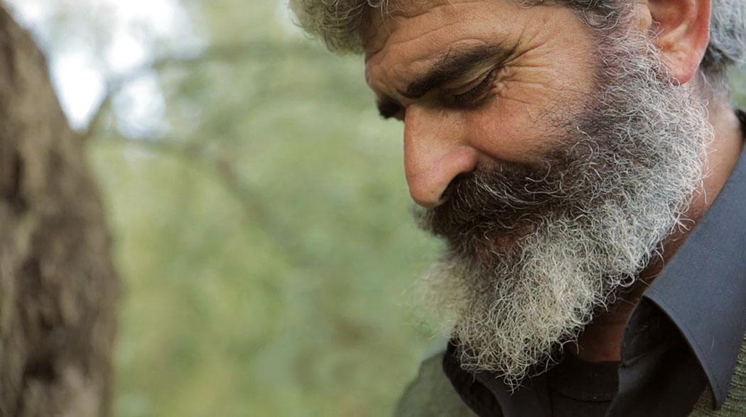 """The Olive Tree Will Always Be Here_Shortmovie_Indigo_View_ol - Erzähler im Kurzfilm """"The Olive Tree Will Always Be Here"""" ist einKreter, der sein Leben mit dem Anbau und der Ernte von Olivenverbracht hat. Foto: Indigo View und GAEA."""