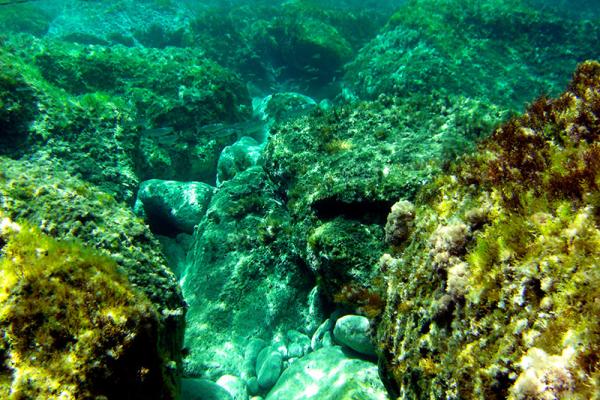 Unterwasser ist es auch schön bunt.