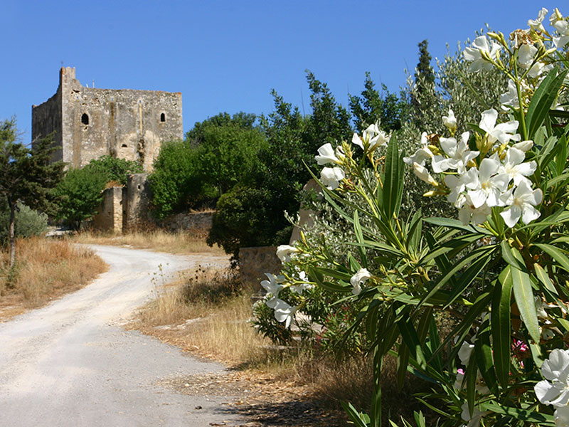 Üppig blühender Orleander säumt den Fahrweg zum Kloster.