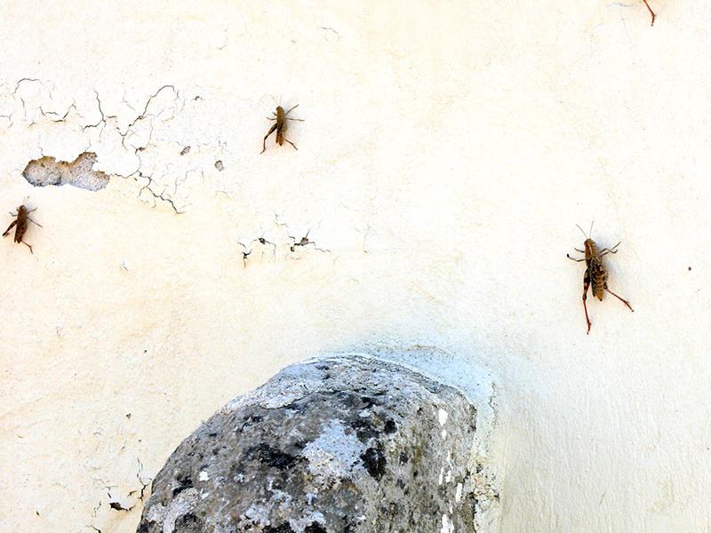 Nur die kleinen Bewohner von Odigitrias lassen sich sehen.