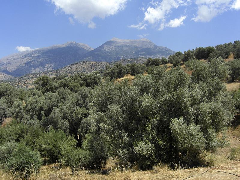 Kreta – Die minoischen Paläste in der Messara-Ebene (2)