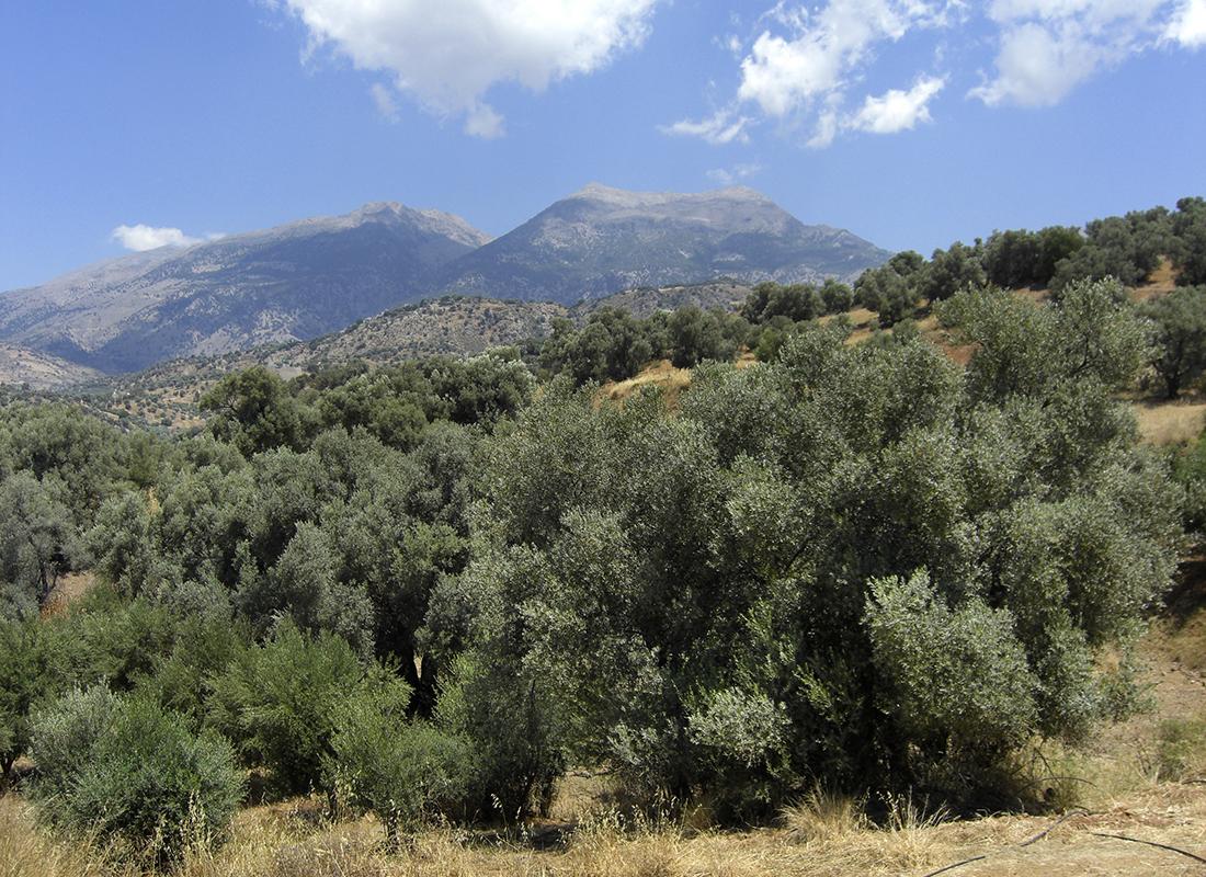 Blick auf das Ida-Massiv mit seinem Doppelhorn. Die Berggipfel dienten den Minoern als Ausrichtungspunkt für die Paläste von Phaistos und Agia Triada.
