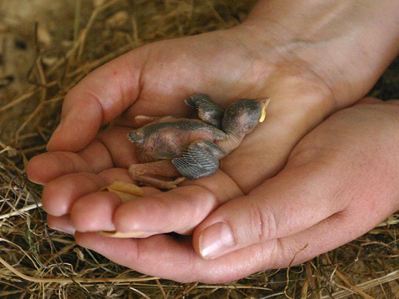 Im inneren der Kapelle sind Vogelnester, auf dem Boden finden wir einen Nestling.