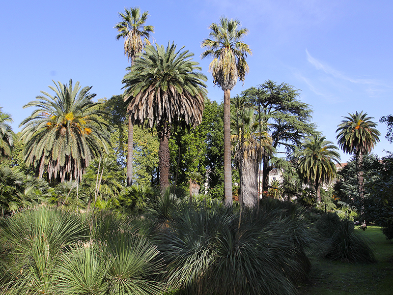Wirkungsvoll: Eine große Sammlung an wunderschönen Palmen.