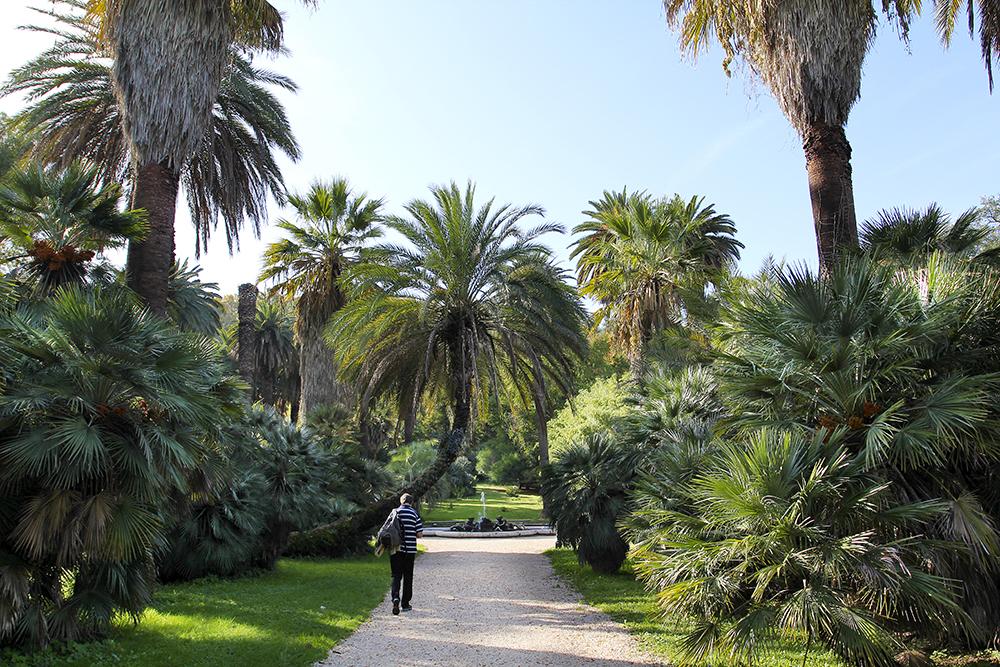 Der Botanische Garten von Rom - Ein Traum für Gartenliebhaber, Fotofreunde und Papageienliebhaber: Die hübschen Alexandersittiche sind hier das ganze Jahr über zu bewundern.