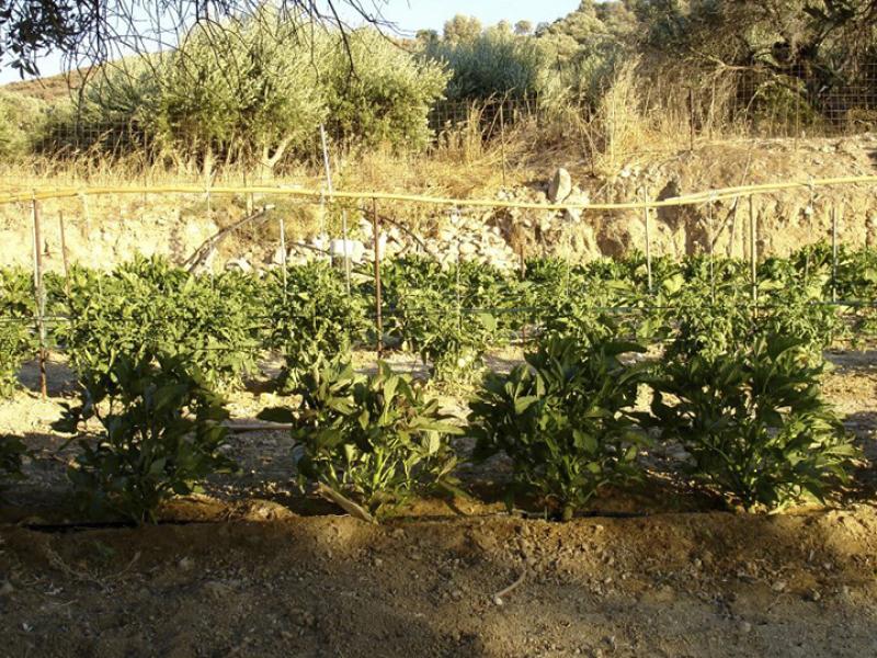 Der Gemüsegarten des Kelari.