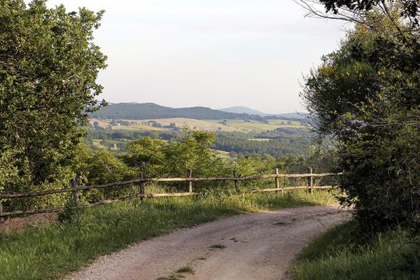 Anfahrt auf einem Schotterweg zum Il Poderino.