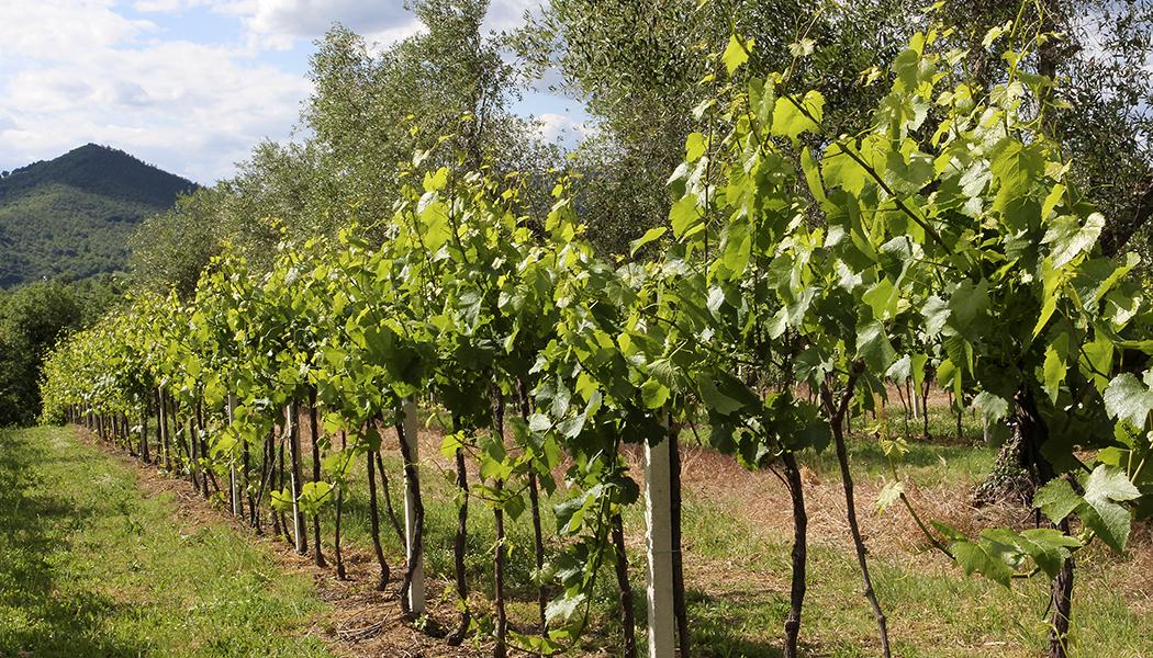 Pitigliano, Sovana und Sorano An der Strada del Vino Colli di Maremma bei Sovana.