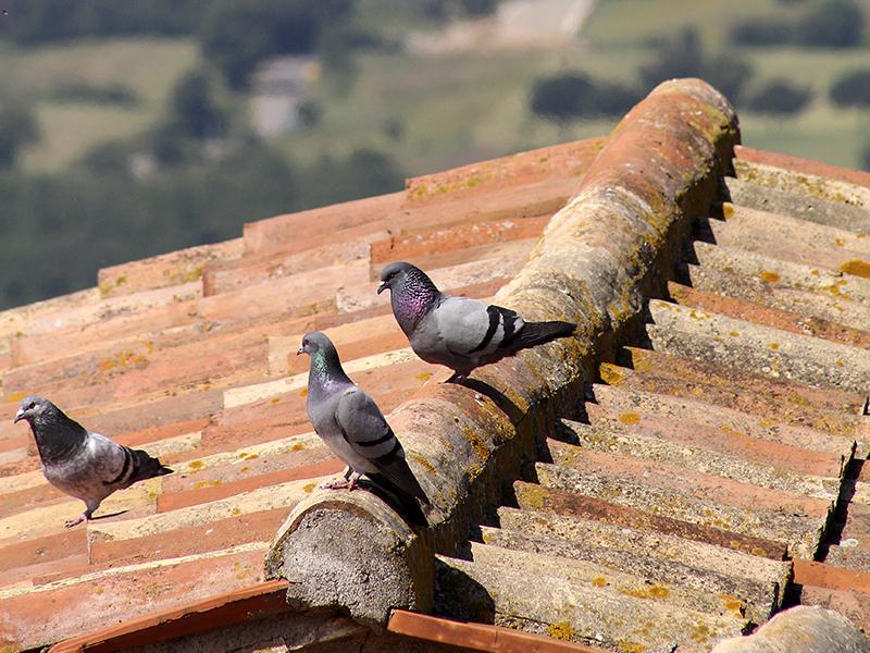 Ob die Tauben auch die schöne Aussicht genießen?