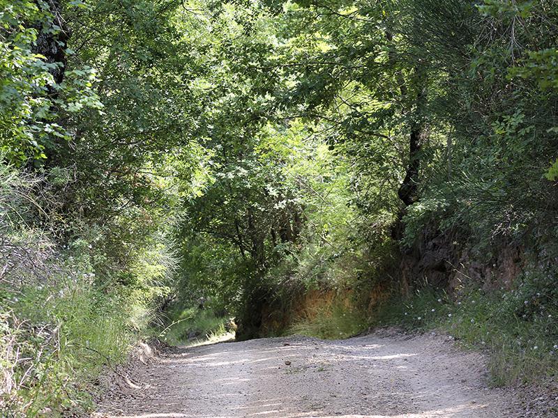 Der Weg führt zunächst durch schönen Mischwald.