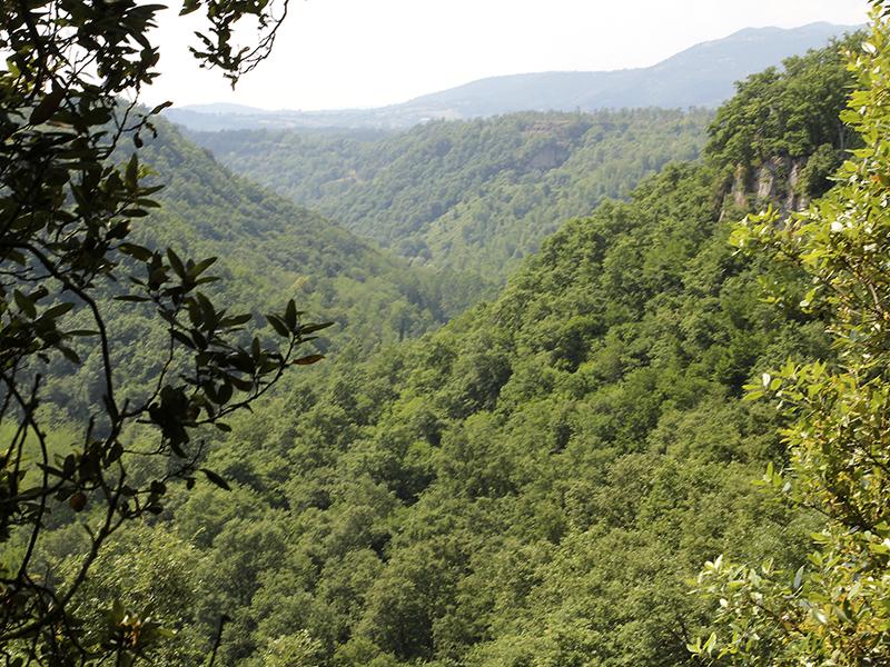Nur selten gibt der dichte Wald einen Blick ins Tal der Lente frei.