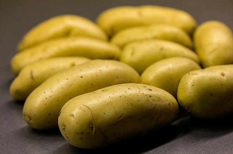 Festkochende Kartoffeln sind eher länglich und nach dem garen kernig im Biss und saftig. Zu ihnen zählen: Cilena, Exquisa, Forelle, Hansa, Linda, Nicola, Selma, Sieglinde und die Bamberger Hörnchen.