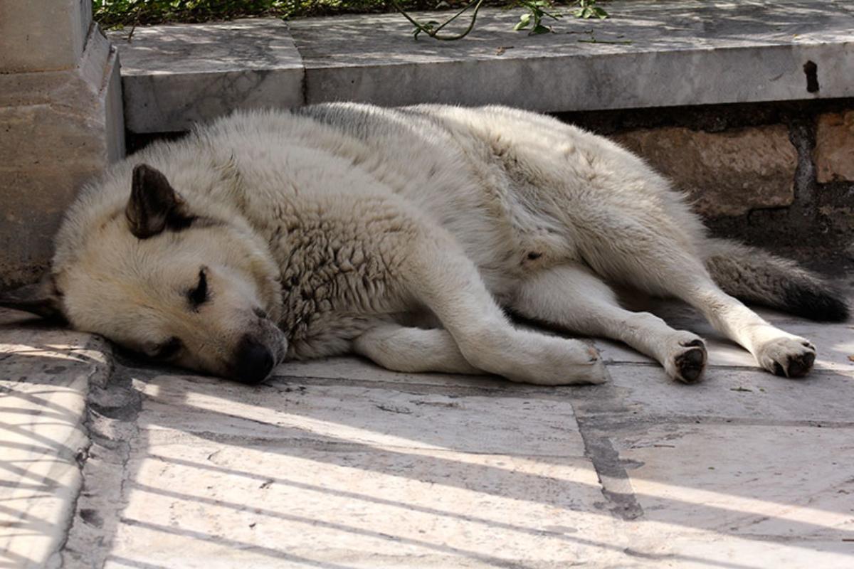 Der gleiche Hund, ein paar Stunden später. Jetzt ist ein Platz im Schatten das richtige.