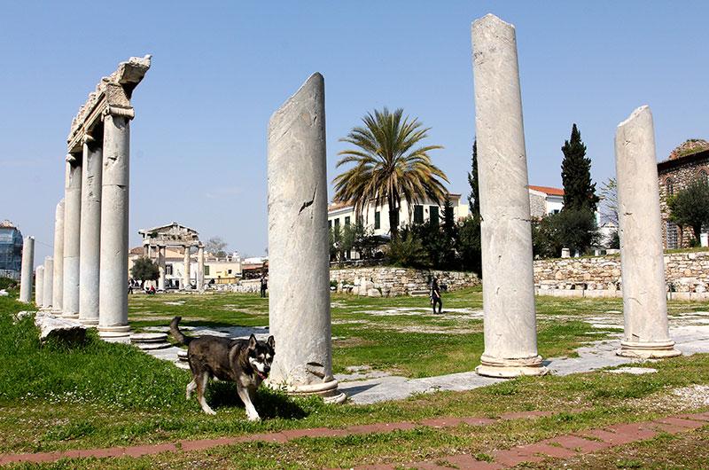 Im Gelände der römischen Agora treffen wir diesen freundlichen Mischlingshund.