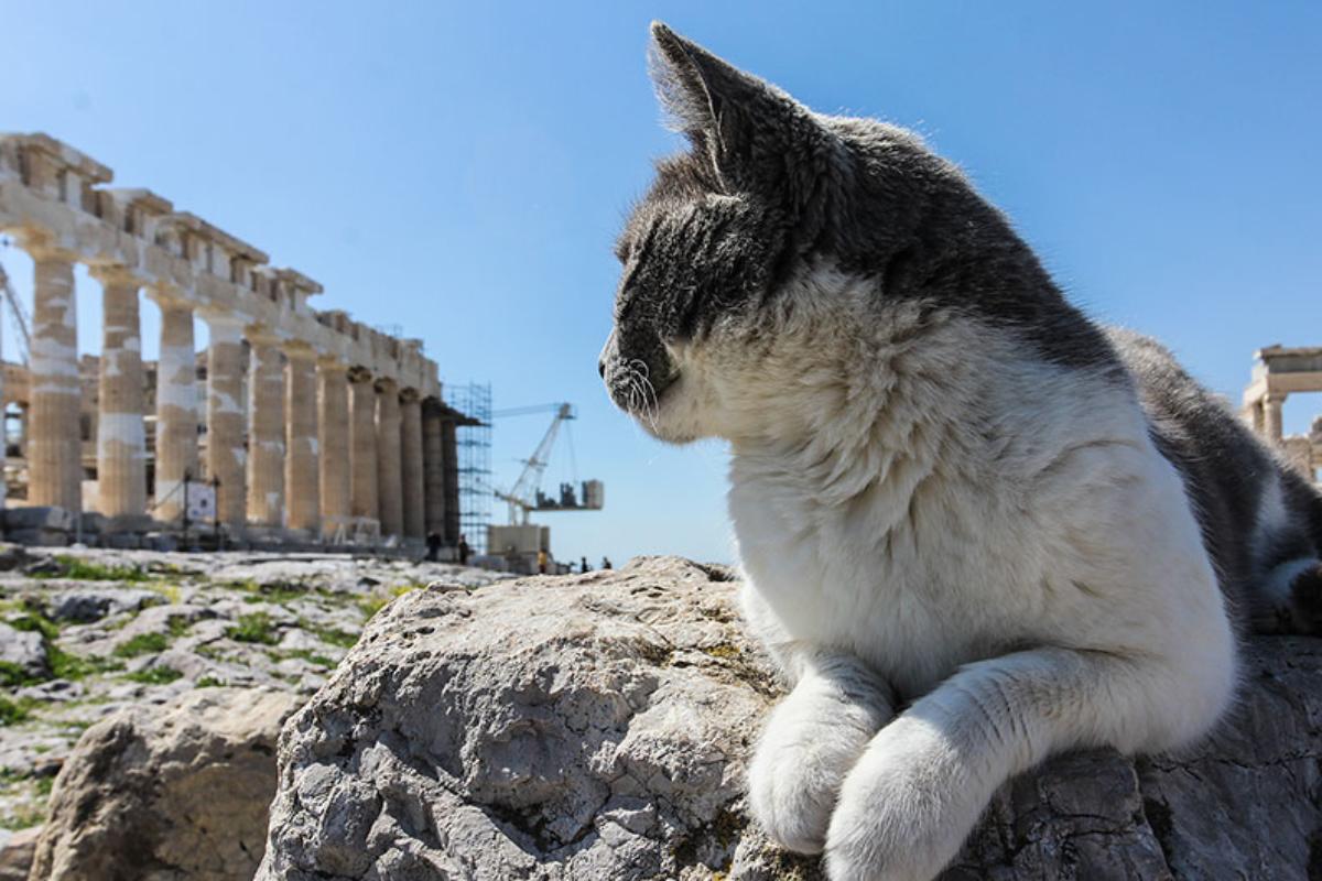 Dieser hübsche Kater besucht regelmässig Athena nachdem er ein kleines Sonnenbad genommen hat. Er mag auch die Besucher des Tempelgeländes gerne, fotografiert zu werden ist er offenbar gewöhnt.