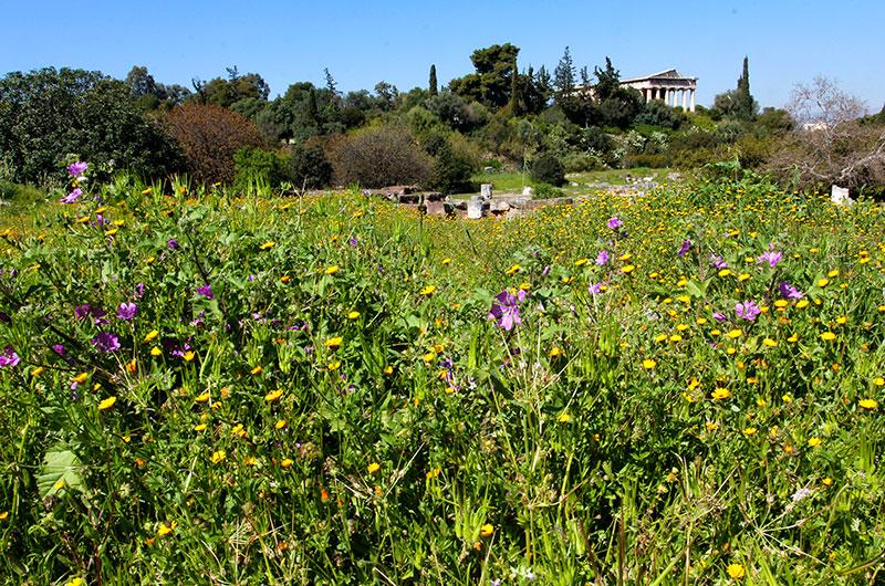 Traumhaft schön: Die griechische Agora im Frühling. Im Hintergrund der Hephaistios-Tempel.