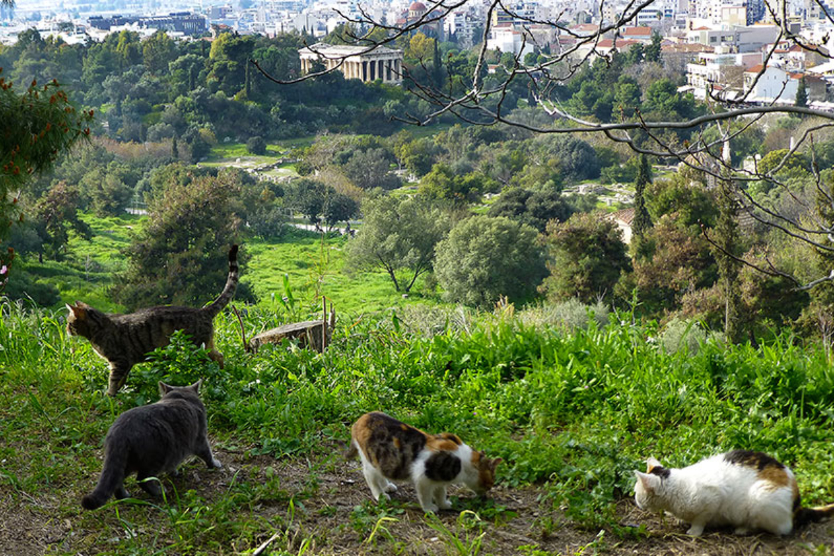 Einer der Katzentreffpunkte oberhalb der griechischen Agora.