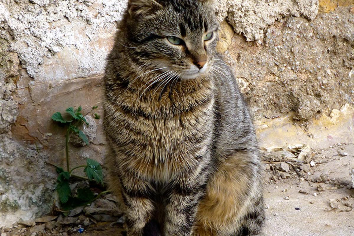 Die Straßenkatzen sind meist eher scheu, vorsichtig und unnahbar. Eben ganz anders als Hunde...