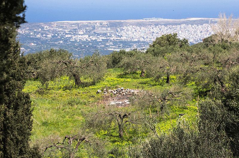 Üppiges Grün und gelbe Blumenwiesen umgeben die Olivenhaine. Gleich dahinter ist Sitia mit seinem Flughafen zu sehen.