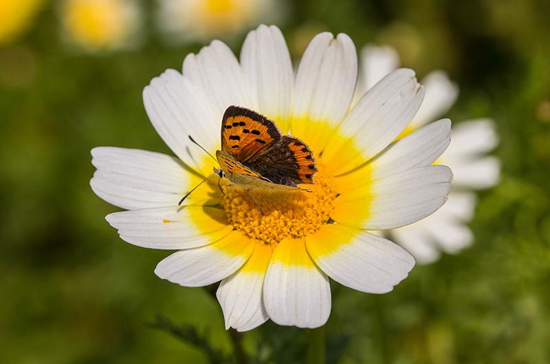 Die Blumenpracht des Frühlings zieht große und kleine Insekten an.