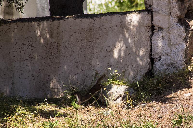 Schnell hinein in die Höhle in der Friedhofsmauer.