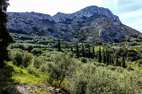 Karger Osten Kretas? Von wegen - es sieht eher aus wie in der Toskana!