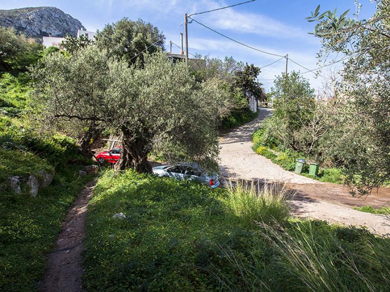 Die Autos werden neben der Dorfstraße abgestellt, direkt unter einer alten Olive. Gut sichtbar, der Wasserablauf (des Winterregens) über die Straße.