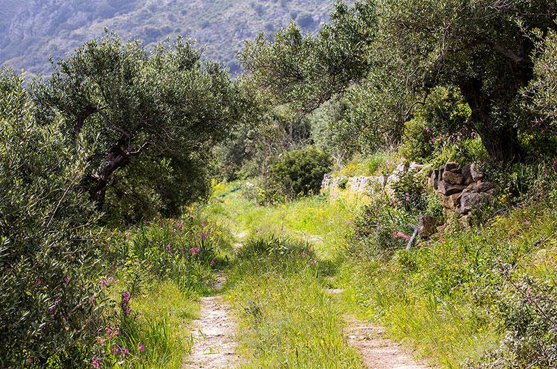 Wir sind zu Anfang durch die Olivenhaine zur Ausgrabung gelaufen. Leider war von oben kein Eingang in das Ruinengelände.