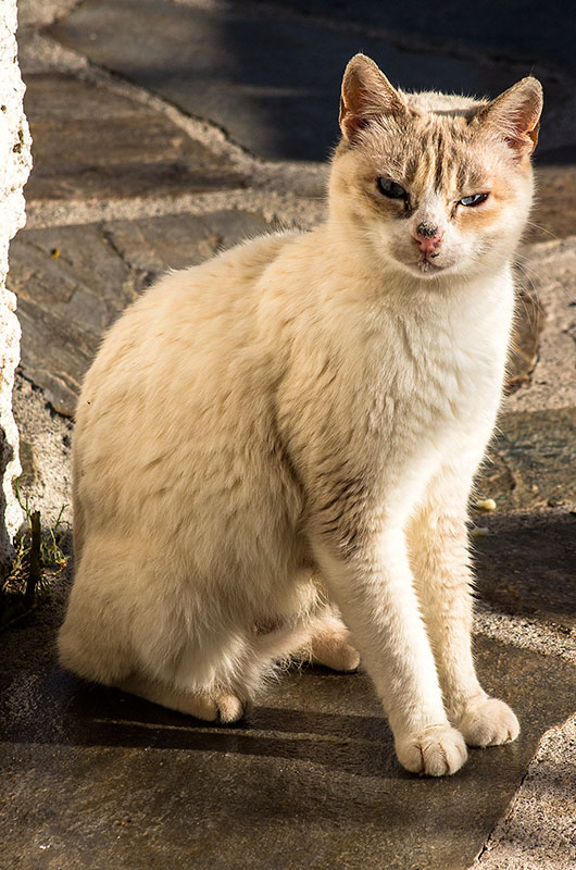 Das ist die zweite Katzendame und auch Mama von drei Katzenbabies. Meist geht sie Thea lieber aus dem Weg.