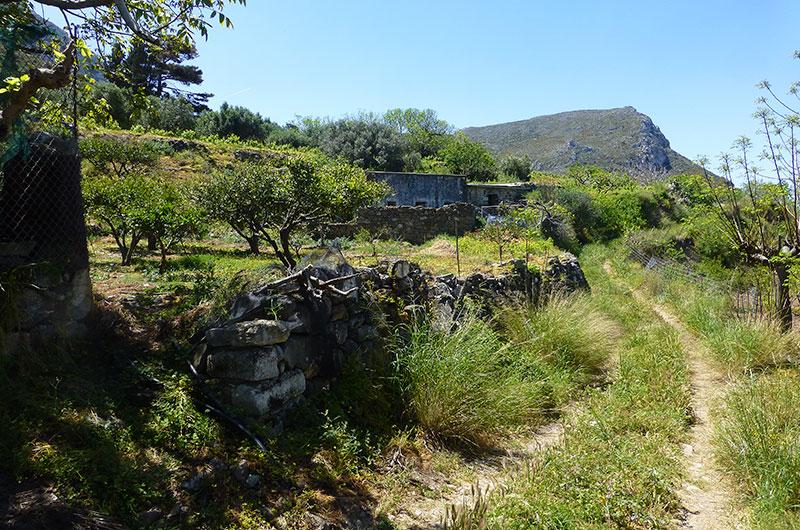 Wir kommen an den verlassenen Häusern von Epano Drys vorbei. Die Feldterrassen werden weiter gepflegt.