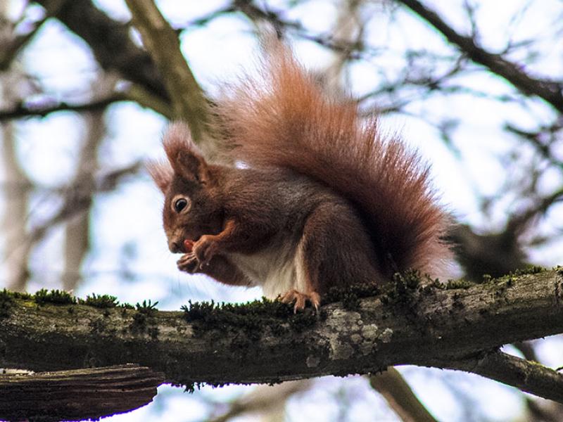 Das Eichhörnchen ist nicht besonders scheu, ob es auch von den Parkbesuchern gefüttert wird?