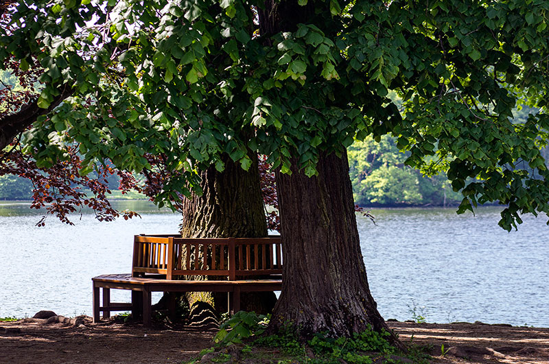 Die Sommerlinde am Badenburger See mit ihrer gemütlichen Rundbank.