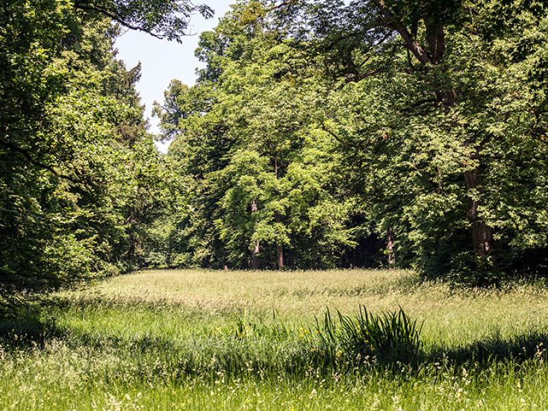 Romantische Wege führen durch schattigen Mischwald im Pagodenburger Tal zum Kugelweiher im Norden des Parks.