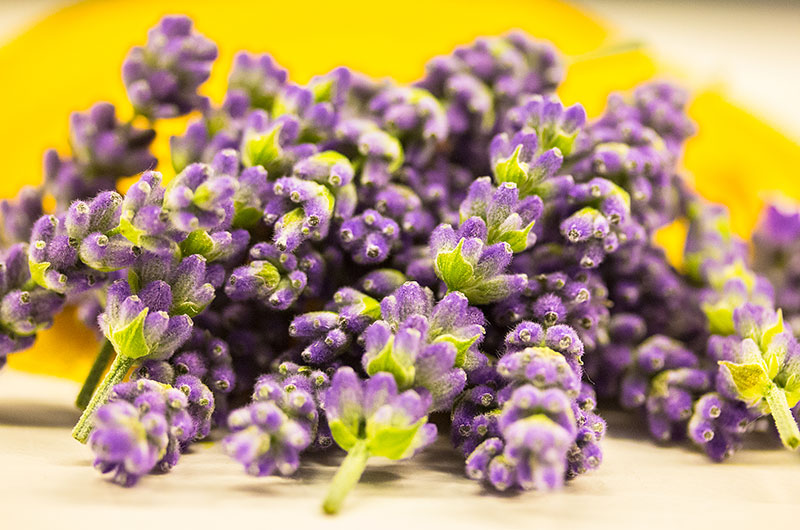 Lavendelblüten - frisch vom Balkon!