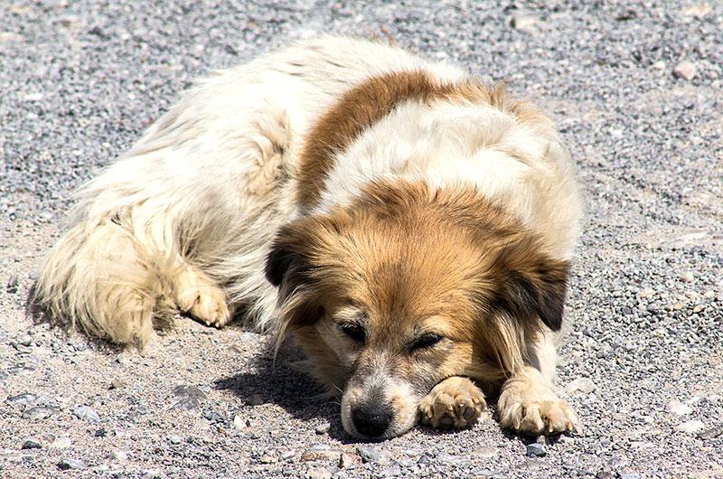 Ein freundlicher Hund begleitet uns zum Strand.
