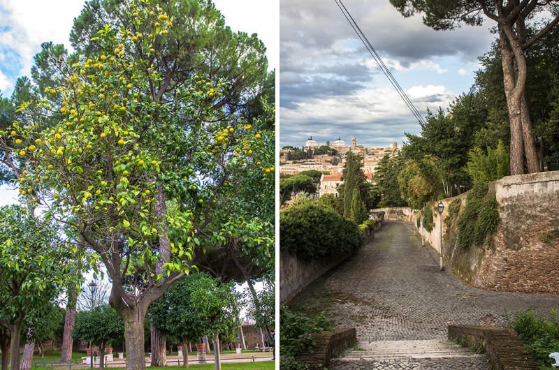 """Ehrwürdige Orangenbäume schmücken den hübschen Park. Wir nehmen die """"alte"""" Straße zum Tiber hinunter für unseren Rückweg zum Forum Borarium."""