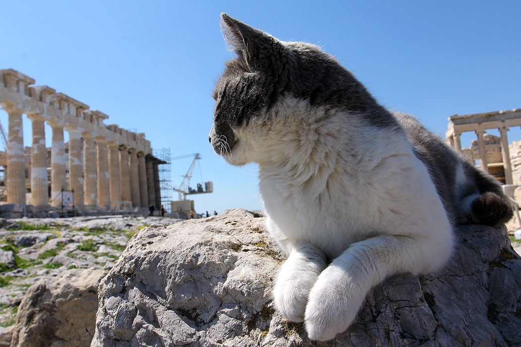 athens - Neue Eintrittspreise für die Akropolis in Athen. Katzen müssen sich darüber keine Gedanken machen.