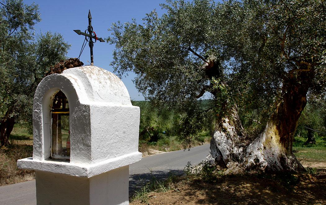 Ein Eklissaki (kleine Kirche) am Straßenrand nahe dem messenischen Dorf Myrsinochori. Der ehrwürdige Olivenbaum steht schon sehr lange an diesem Platz.