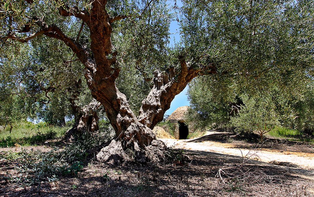 Westmessenien: Das eindrucksvolle Tholosgrab liegt neben dem Nestorpalast bei Pylos in einem schattigen Olivenhain. Es wurde über Generationen als Grablege der mykenischen Königsfamilie genutzt und stammt aus dem 16. Jahrhundert vor Christus.