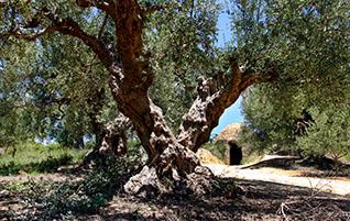 Peloponnes: Navarinobucht (2) – Der mykenische Nestorpalast bei Pylos